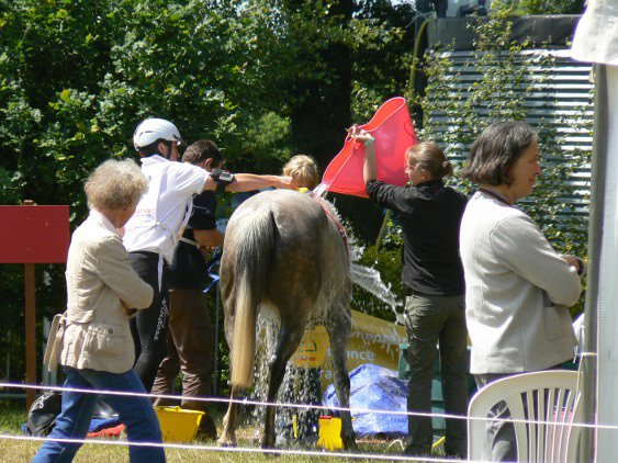 Corlay : concours international d\'endurance. On refroidit